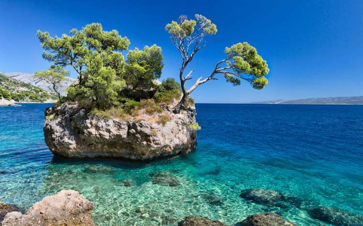 Brela beach tree on island, Croatia