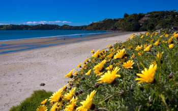 Onetangi Beach - New Zealand